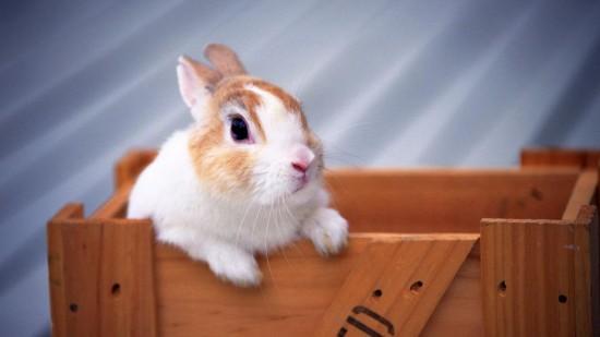 ネット,話題,人気,ウサギ,画像,まとめgi150