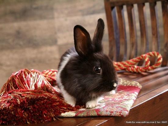 ネット,話題,人気,ウサギ,画像,まとめgi160