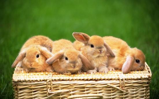 萌え死ぬ,可愛い,ウサギ,画像,まとめgi167
