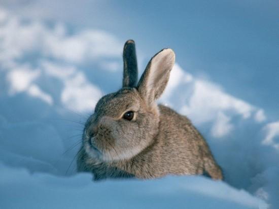 ネット,話題,人気,ウサギ,画像,まとめgi170
