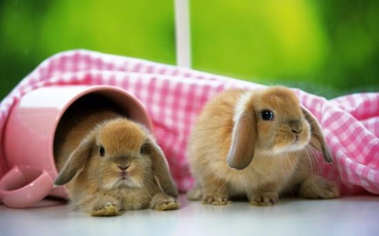萌え死ぬ,可愛い,ウサギ,画像,まとめgi196
