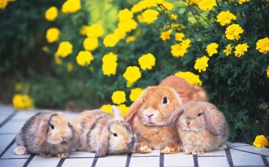 萌え死ぬ,可愛い,ウサギ,画像,まとめgi230