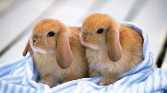 ネット,話題,人気,ウサギ,画像,まとめgi242
