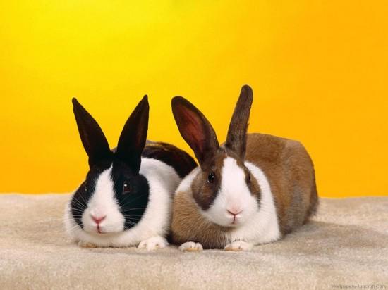 ネット,話題,人気,ウサギ,画像,まとめgi263