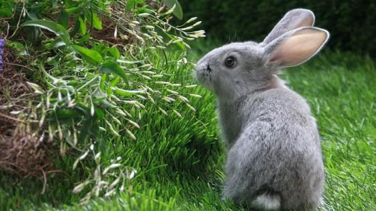 萌え死ぬ,可愛い,ウサギ,画像,まとめgi265