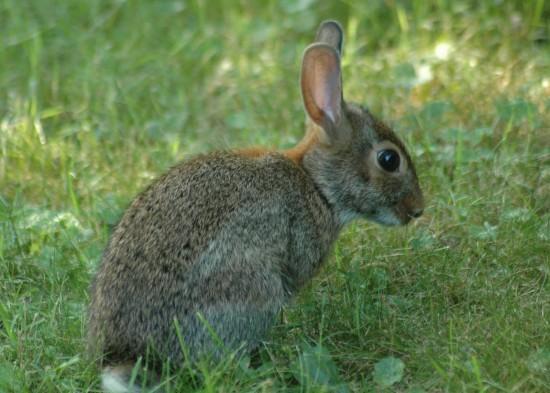 萌え死ぬ,可愛い,ウサギ,画像,まとめgi268