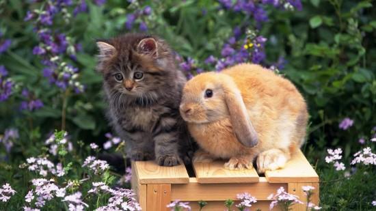 萌え死ぬ,可愛い,ウサギ,画像,まとめgi301