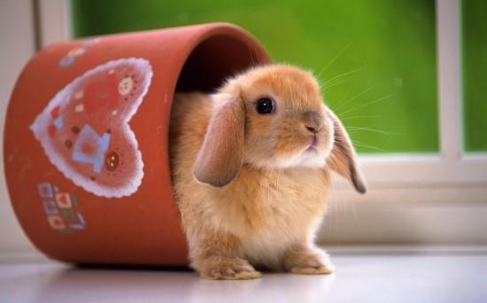 ネット,話題,人気,ウサギ,画像,まとめgi322