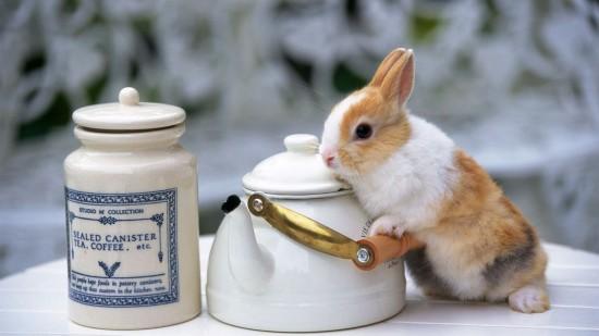 ネット,話題,人気,ウサギ,画像,まとめgi330