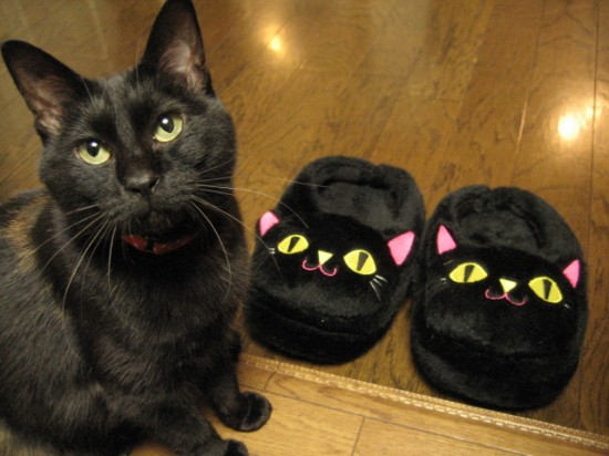 クール,カッコイイ,黒猫,画像,まとめ003