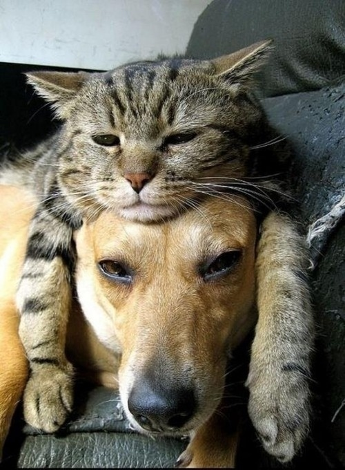 可愛い,犬,猫,画像,まとめ004