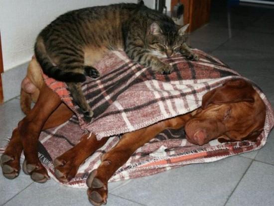 可愛い,犬,猫,画像,まとめ005