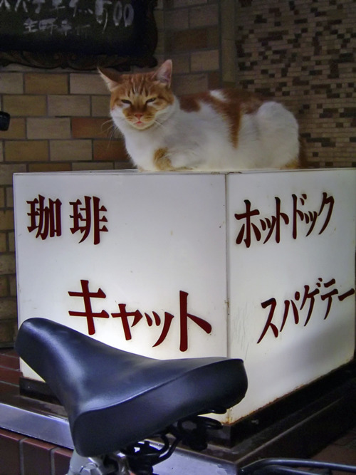おもしろ,猫,画像,まとめ008
