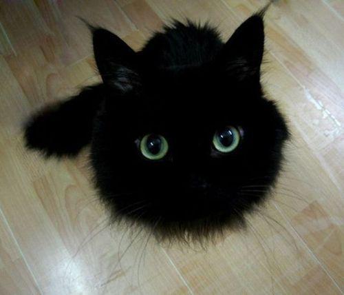 クール,カッコイイ,黒猫,画像,まとめ009