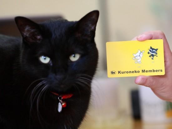 クール,カッコイイ,黒猫,画像,まとめ012