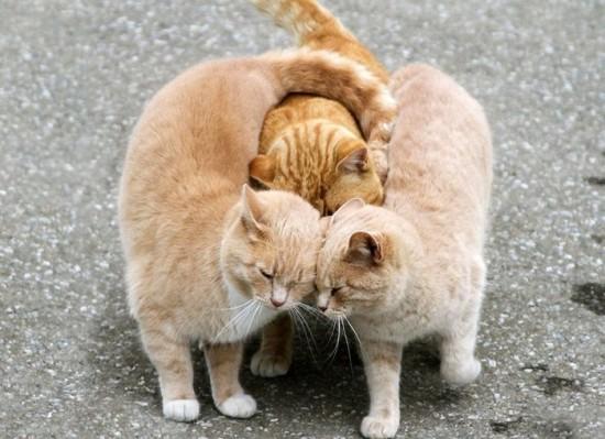 おもしろ,猫,画像,まとめ014