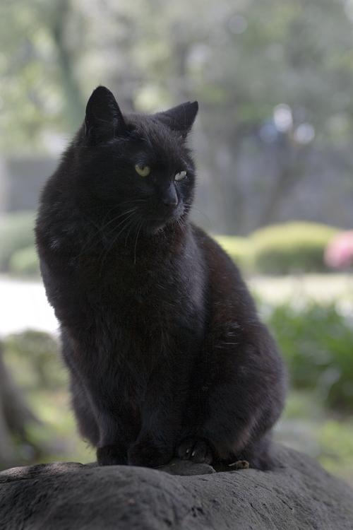 クール,カッコイイ,黒猫,画像,まとめ015