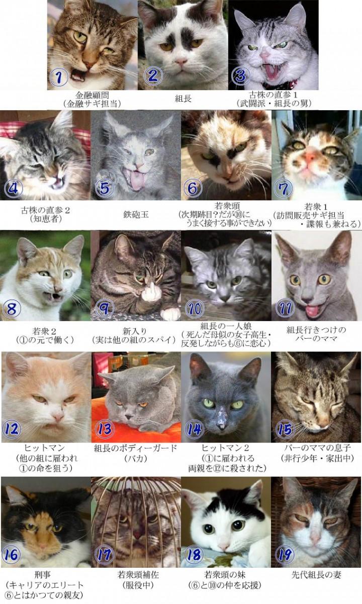 おもしろ,猫,画像,まとめ016