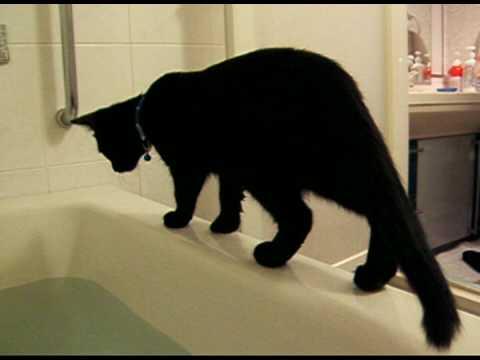 クール,カッコイイ,黒猫,画像,まとめ018