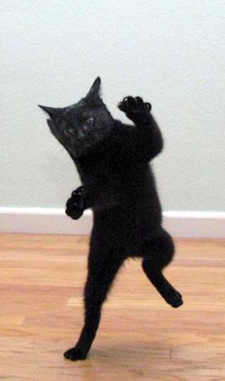 クール,カッコイイ,黒猫,画像,まとめ028