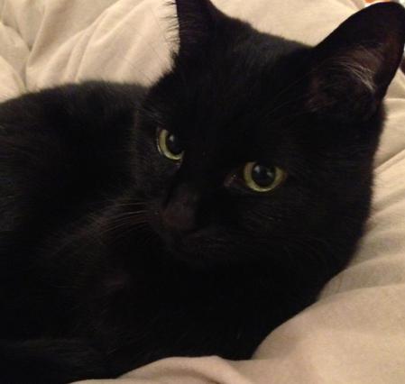 クール,カッコイイ,黒猫,画像,まとめ029