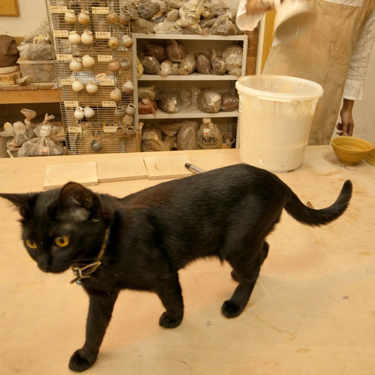 クール,カッコイイ,黒猫,画像,まとめ030