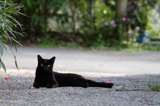 クール,カッコイイ,黒猫,画像,まとめ034