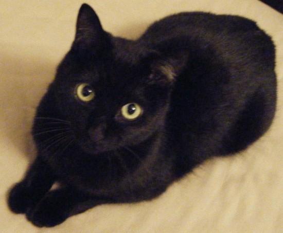 クール,カッコイイ,黒猫,画像,まとめ035