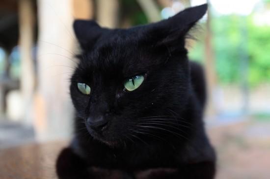 クール,カッコイイ,黒猫,画像,まとめ037