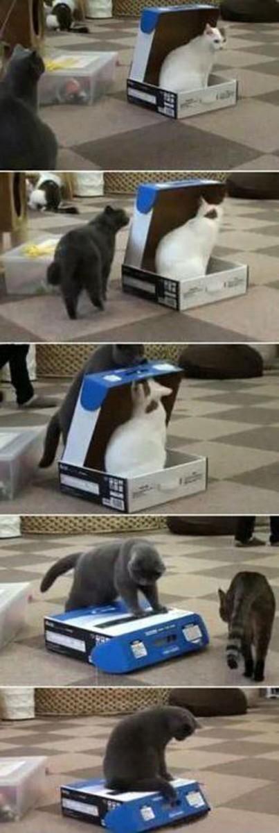 おもしろ,猫,画像,まとめ081