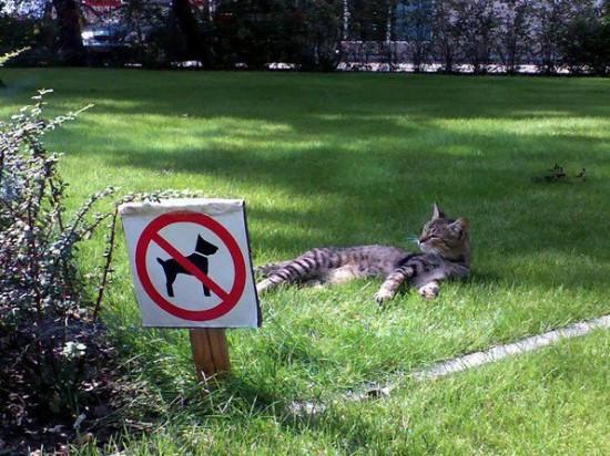 おもしろ,猫,画像,まとめ087