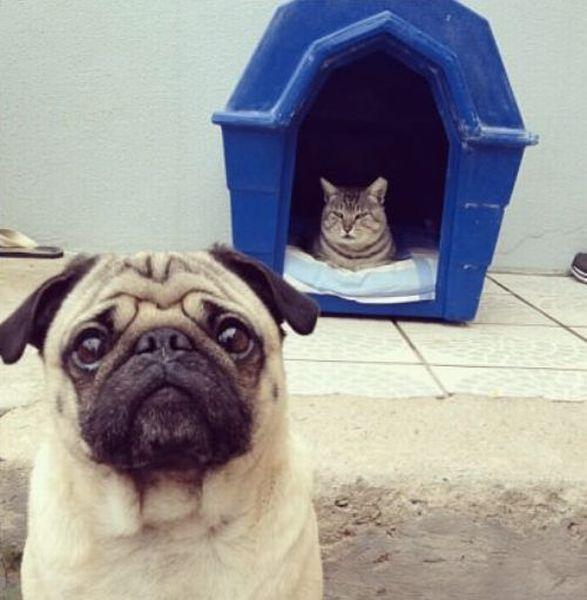 可愛い,犬,猫,画像,まとめ170