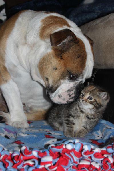 可愛い,犬,猫,画像,まとめ173