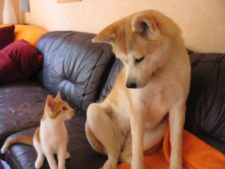 可愛い,犬,猫,画像,まとめ174