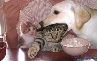 猫,犬,仲良し,画像,まとめ001