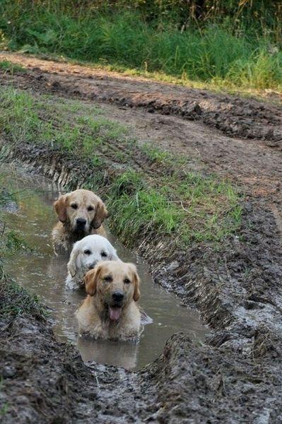 遊び,大好き,わんぱく,犬,画像,まとめ003