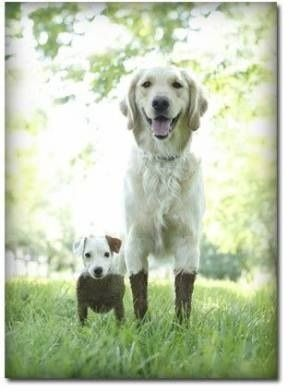 遊び,大好き,わんぱく,犬,画像,まとめ007