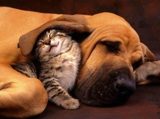 猫,犬,仲良し,画像,まとめ007