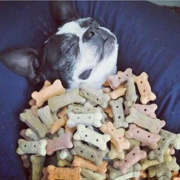 遊び,大好き,わんぱく,犬,画像,まとめ010