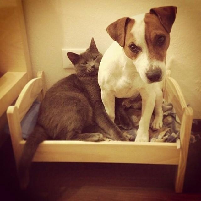 猫,犬,仲良し,画像,まとめ012