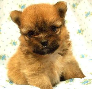 ハーフ,ミックス犬,画像,まとめ012