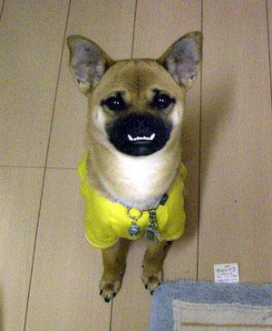 ハーフ,ミックス犬,画像,まとめ014
