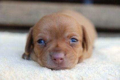 ハーフ,ミックス犬,画像,まとめ015