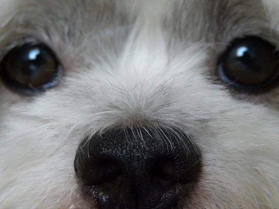 厳選,癒し,可愛い,犬,わんこ,画像,まとめ039