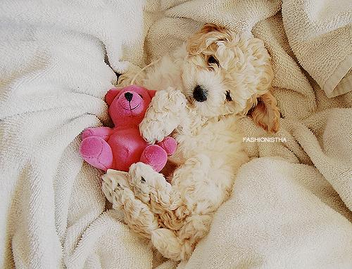 厳選,癒し,可愛い,犬,わんこ,画像,まとめ043