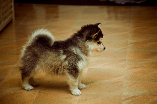 厳選,癒し,可愛い,犬,わんこ,画像,まとめ052