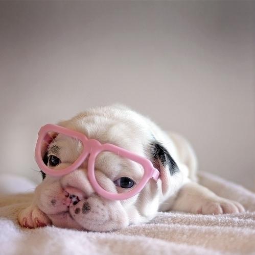 厳選,癒し,可愛い,犬,わんこ,画像,まとめ053