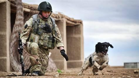 軍人,動物,ほっこり,画像,まとめ003