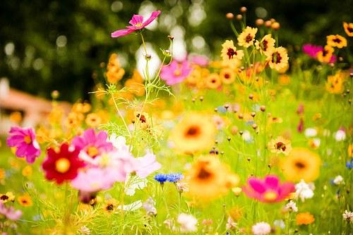 センス,オシャレ,フラワー,花,画像,まとめ006
