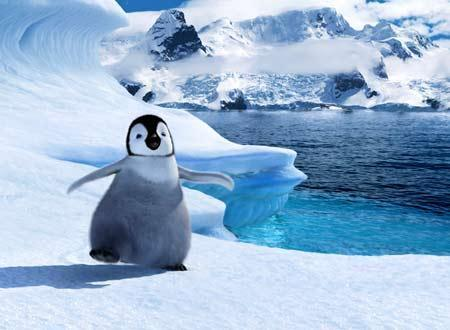 癒される,子ペンギン,画像,まとめ009